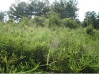 LOT 2 CAIN CREEK, Sylacauga, AL 35151