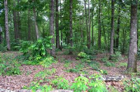 Lot 95 Keowee Falls South Town  Apn, Salem, SC 29676